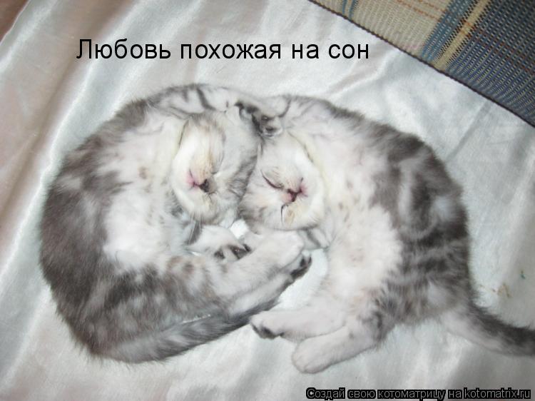 Котоматрица: Любовь похожая на сон