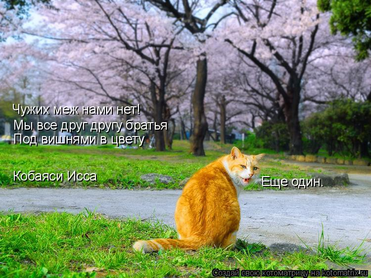 Котоматрица: Чужих меж нами нет! Мы все друг другу братья Под вишнями в цвету Кобаяси Исса Еще один.
