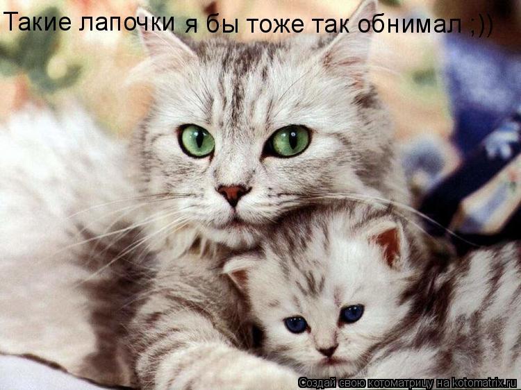 Котоматрица: Такие лапочки  я бы тоже так обнимал ;))
