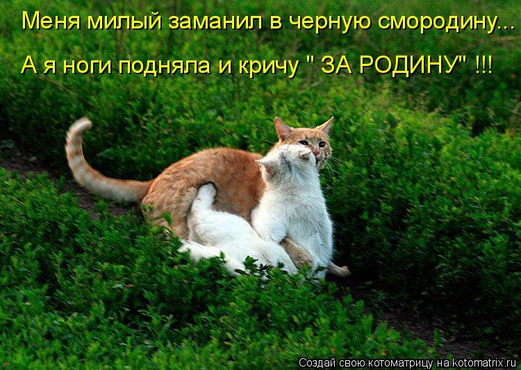 """Котоматрица: Меня милый заманил в черную смородину... А я ноги подняла и кричу """" ЗА РОДИНУ"""" !!!"""