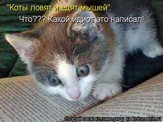 """Котоматрица: Что??? Какой идиот это написал! """"Коты ловят и едят мышей"""""""