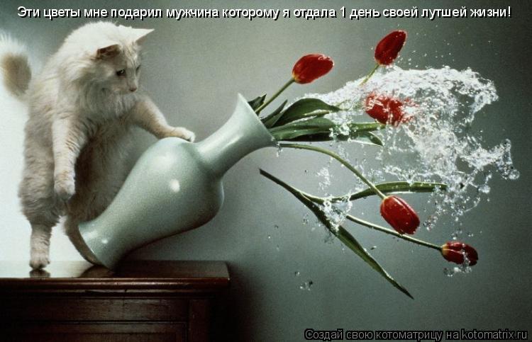 Котоматрица: Эти цветы мне подарил мужчина которому я отдала 1 день своей лутшей жизни!