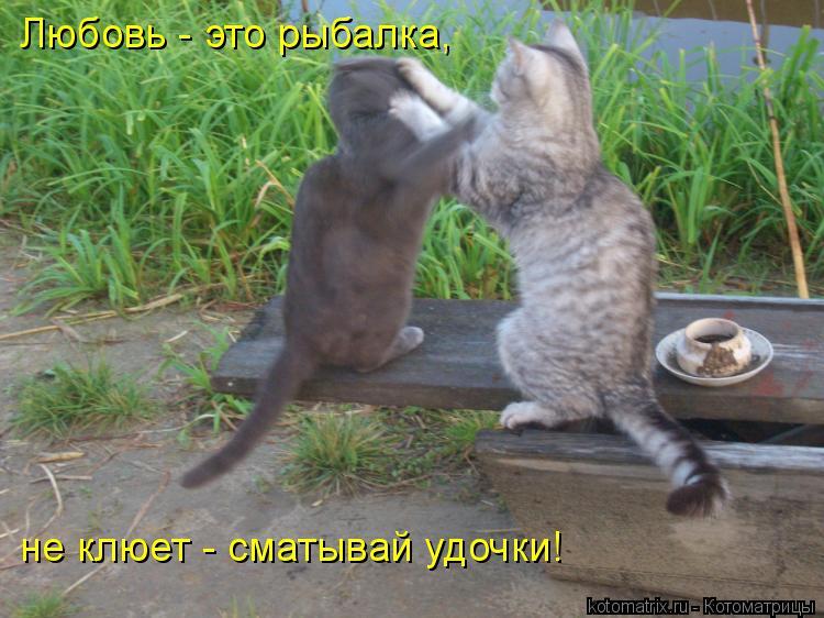 Котоматрица: Любовь - это рыбалка,  не клюет - сматывай удочки!