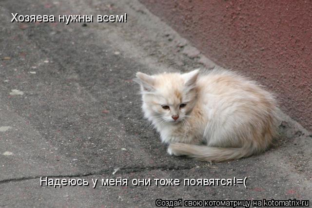 Котоматрица: Хозяева нужны всем! Надеюсь у меня они тоже появятся!=(