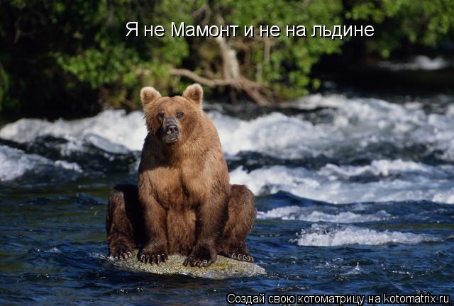 Котоматрица: Я не Мамонт и не на льдине