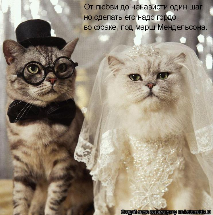 Котоматрица: От любви до ненависти один шаг,  но сделать его надо гордо,  во фраке, под марш Мендельсона.