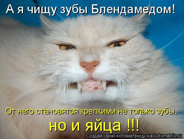 Котоматрица: А я чищу зубы Блендамедом! От него становятся крепкими не только зубы, но и яйца !!!