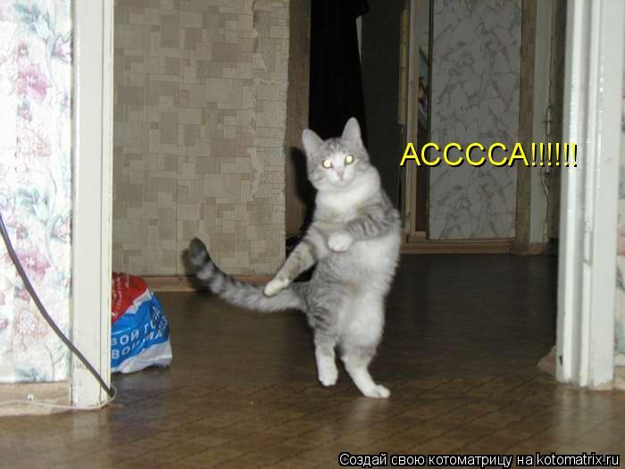 Котоматрица: АССССА!!!!!!