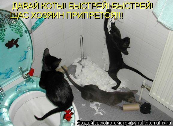 Котоматрица: ДАВАЙ КОТЫ! БЫСТРЕЙ! БЫСТРЕЙ! ЩАС ХОЗЯИН ПРИПРЕТСЯ!!!