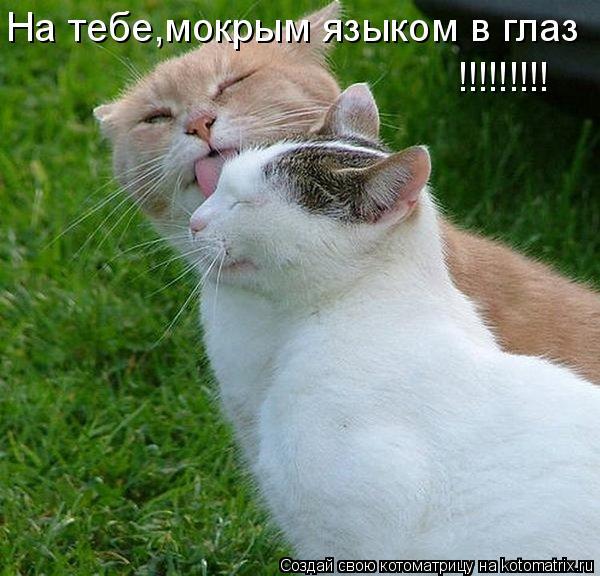 Котоматрица: На тебе,мокрым языком в глаз !!!!!!!!!