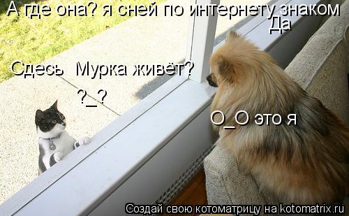Котоматрица: Сдесь  Мурка живёт? Да А где она? я сней по интернету знаком О_О это я ?_?