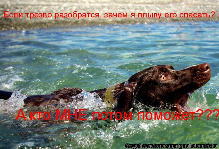 Котоматрица: Если трезво разобратся, зачем я плыву его спасать? А кто МНЕ потом поможет???