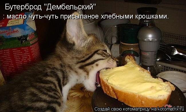 """Котоматрица: Бутерброд """"Дембельский"""" : масло чуть-чуть присыпаное хлебными крошками."""