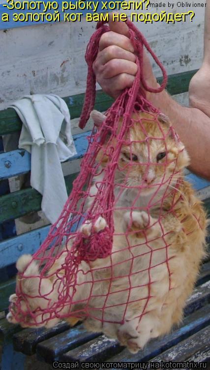Котоматрица: -Золотую рыбку хотели? а золотой кот вам не подойдет? made by Oblivioner