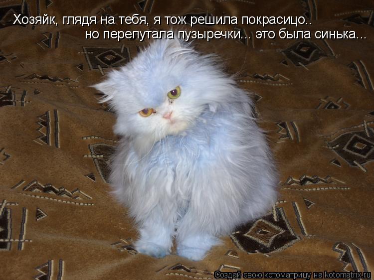 Котоматрица: Хозяйк, глядя на тебя, я тож решила покрасицо.. но перепутала пузыречки... это была синька...