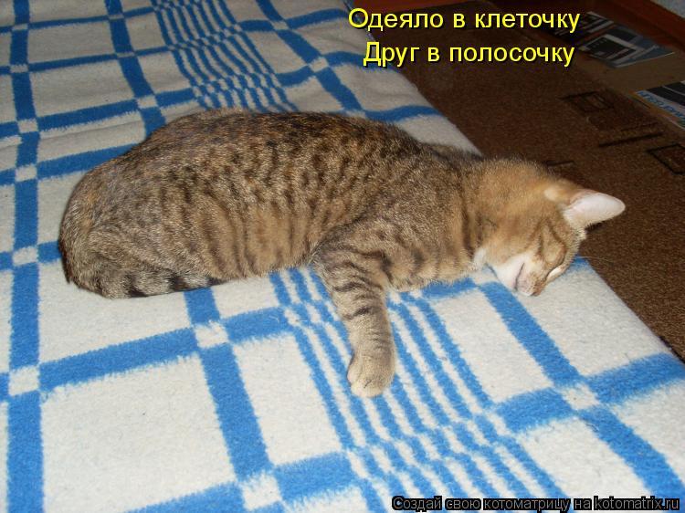 Котоматрица: Одеяло в клеточку Друг в полосочку