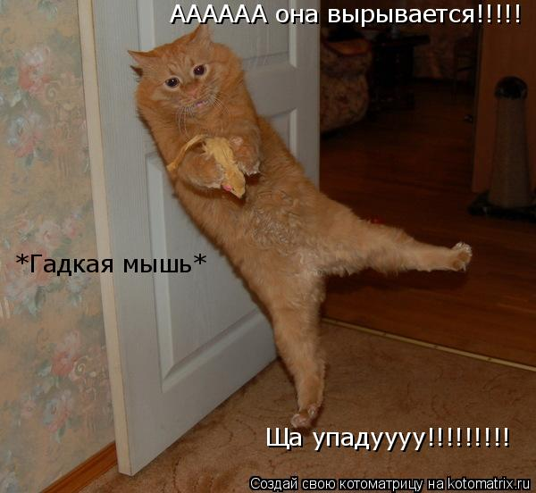Котоматрица: АААААА она вырывается!!!!! Ща упадуууу!!!!!!!!! *Гадкая мышь*
