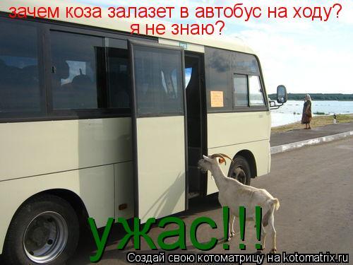 Котоматрица: зачем коза залазет в автобус на ходу? я не знаю? ужас!!!