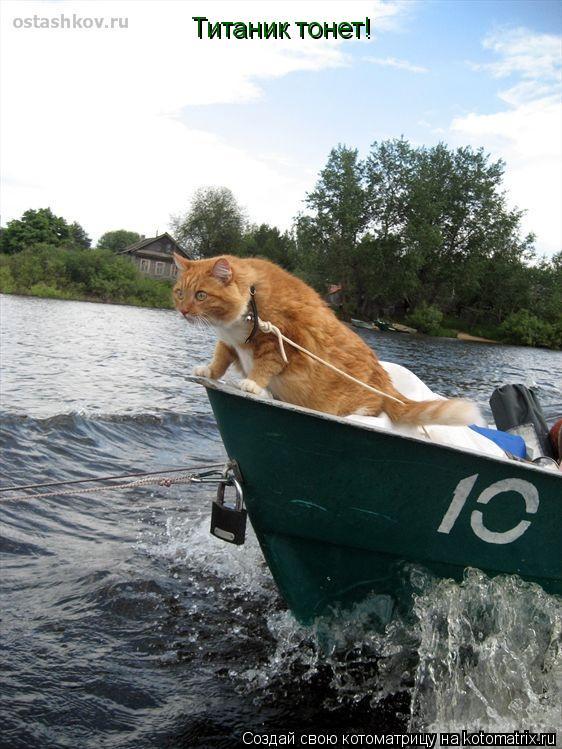 Котоматрица: Титаник тонет!