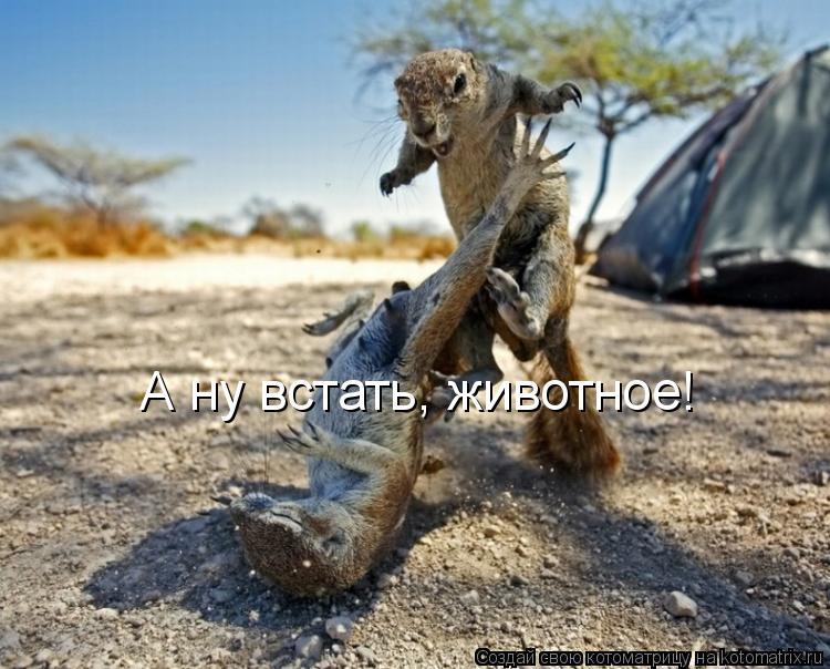 Котоматрица: А ну встать, животное!