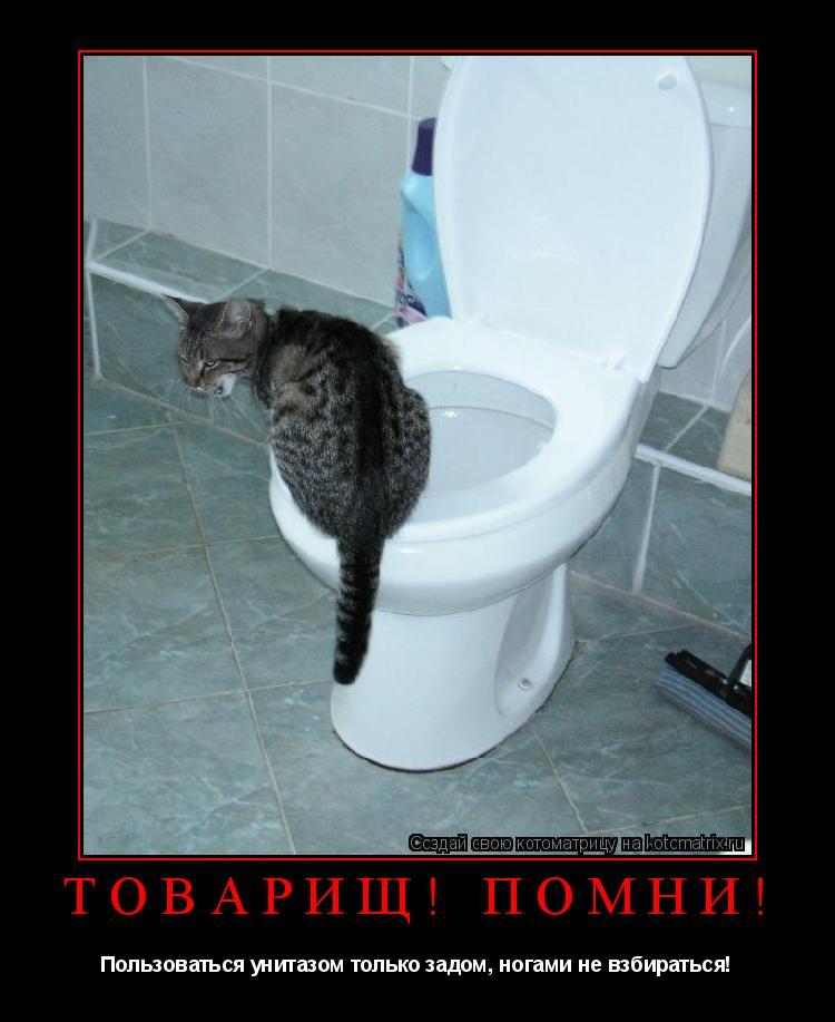 Котоматрица: ТОВАРИЩ! ПОМНИ! Пользоваться унитазом только задом, ногами не взбираться!