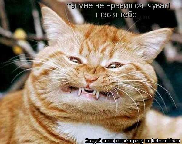 Котоматрица: щас я тебе...... ты мне не нравишся, чувак!