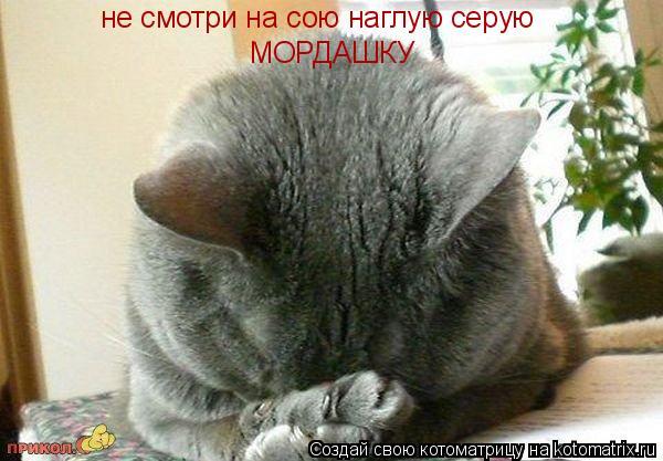 Котоматрица: не смотри на сою наглую серую не смотри на сою наглую серую МОРДАШКУ