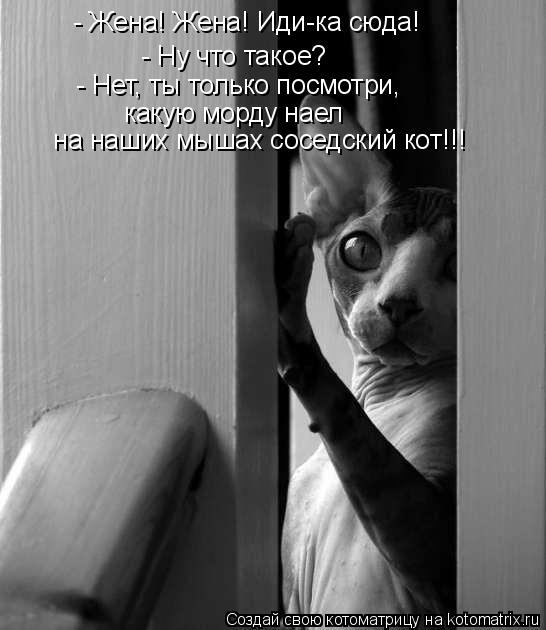 Котоматрица: - Жена! Жена! Иди-ка сюда!  - Ну что такое?  - Нет, ты только посмотри,  какую морду наел   на наших мышах соседский кот!!!