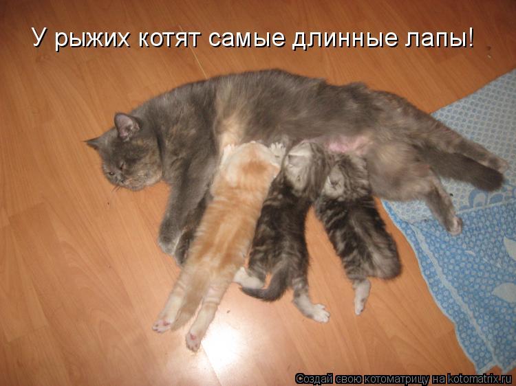Котоматрица: У рыжих котят самые длинные лапы!