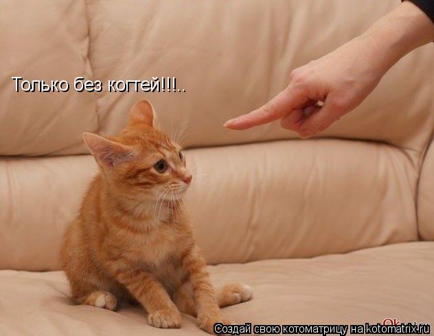 Котоматрица: Только без когтей!!!..