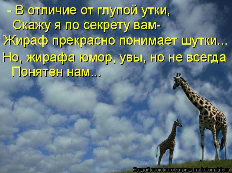 Котоматрица: - В отличие от глупой утки, Скажу я по секрету вам- Жираф прекрасно понимает шутки... Но, жирафа юмор, увы, но не всегда Понятен нам...