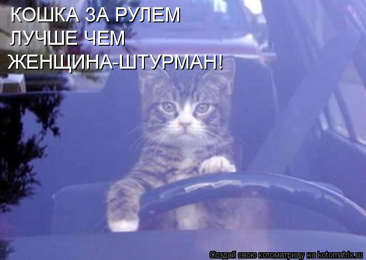 Котоматрица: КОШКА ЗА РУЛЕМ ЛУЧШЕ ЧЕМ ЖЕНЩИНА-ШТУРМАН!