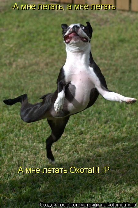 Котоматрица: -А мне летать, а мне летать А мне летать Охота!!! :Р