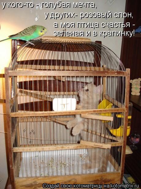 Котоматрица: у кого-то - голубая мечта, у других- розовый слон, а моя птица счастья - зеленая и в крапинку!