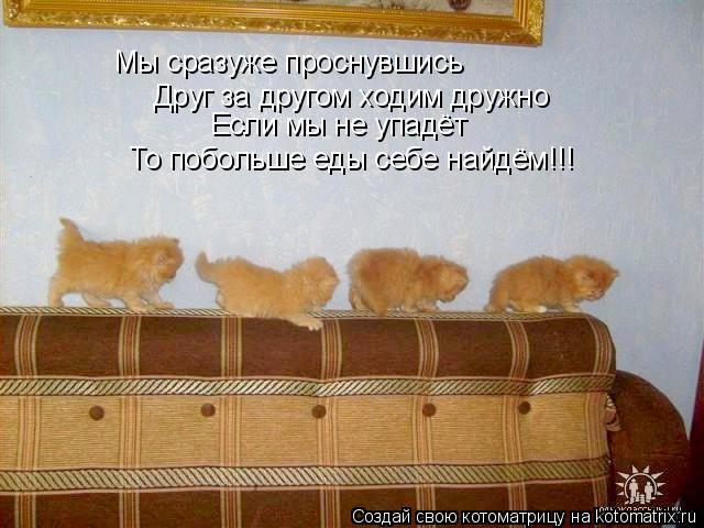Котоматрица: Мы сразуже проснувшись Друг за другом ходим дружно Если мы не упадёт То побольше еды себе найдём!!!