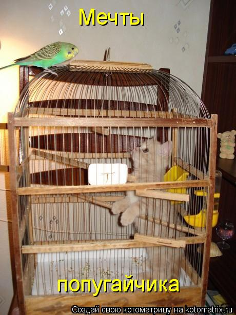 Котоматрица: Мечты попугайчика