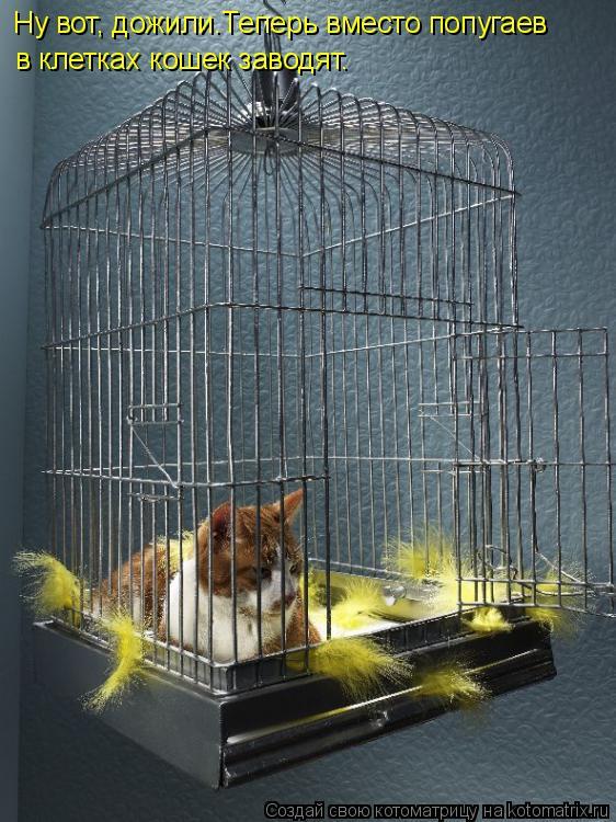Котоматрица: Ну вот, дожили.Теперь вместо попугаев в клетках кошек заводят.