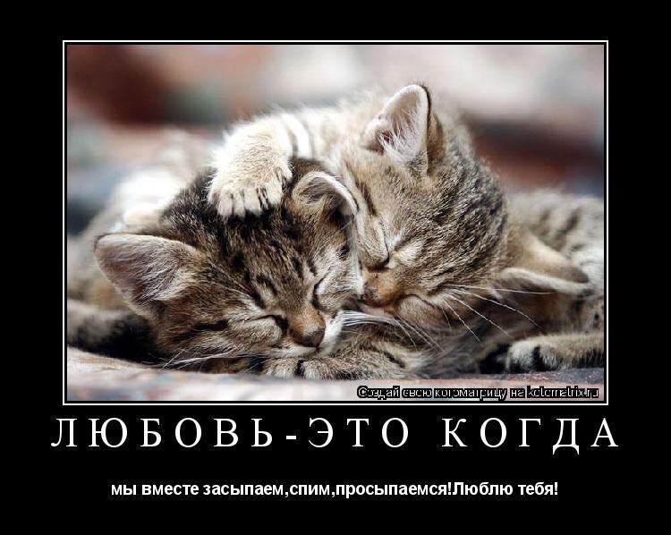 Котоматрица: Любовь-это когда мы вместе засыпаем,спим,просыпаемся!Люблю тебя!
