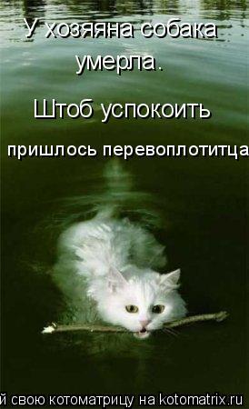 Котоматрица: У хозяяна собака умерла . Штоб успокоить пришлось перевоплотитца