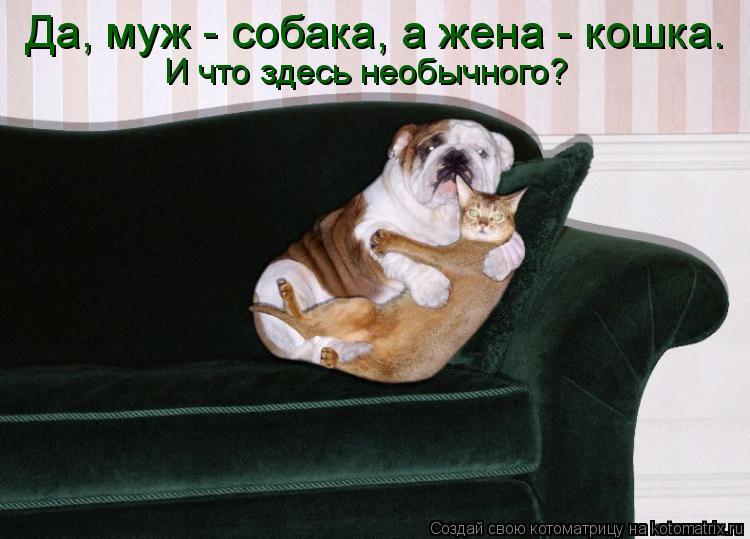 Котоматрица: Да, муж - собака, а жена - кошка. И что здесь необычного?