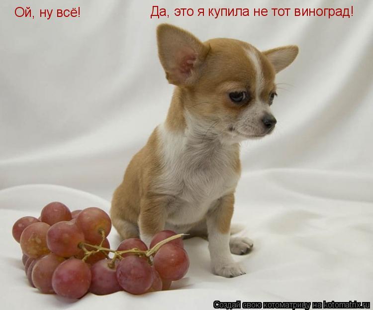 Котоматрица: Ой, ну всё! Да, это я купила не тот виноград!