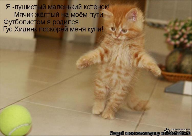Котоматрица: Я -пушистый,маленький котёнок! Мячик жёлтый на моём пути, Футболистом я родился Гус Хидинк поскорей меня купи!