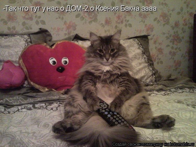 Котоматрица: -Так что тут у нас о ДОМ-2,о Ксения Бакча аааа