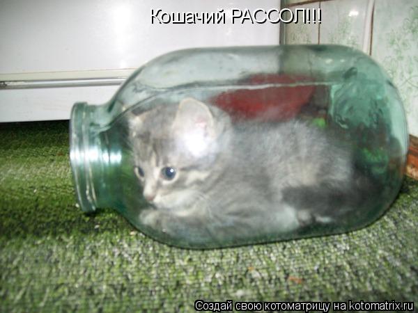 Котоматрица: Кошачий РАССОЛ!!!