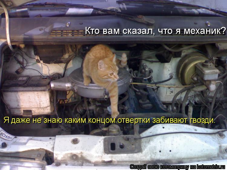 Котоматрица: Кто вам сказал, что я механик? Я даже не знаю каким концом отвертки забивают гвозди.
