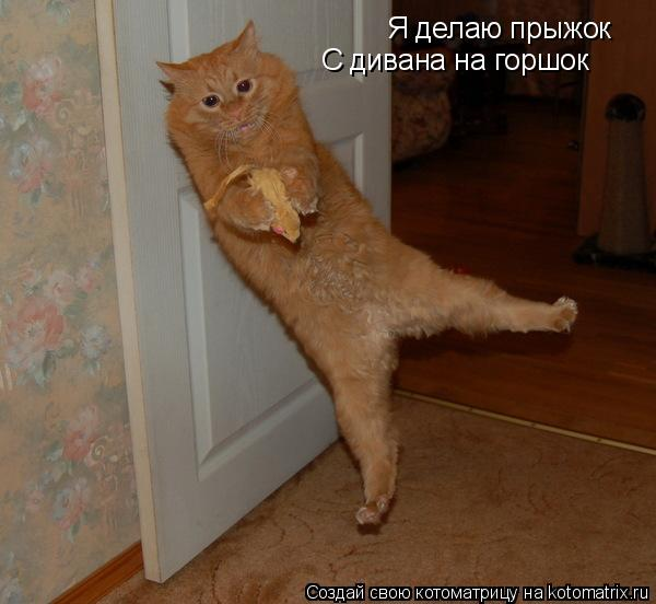 Котоматрица: Я делаю прыжок С дивана на горшок