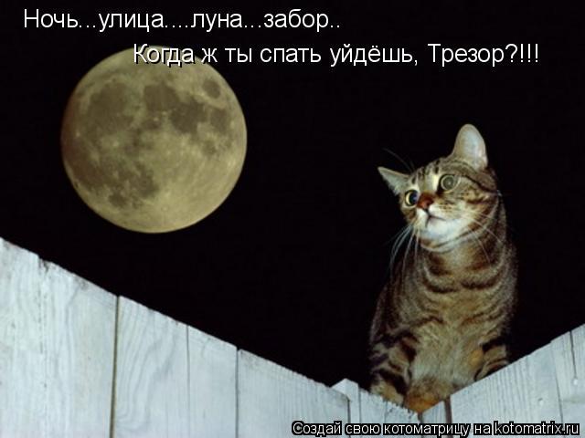 Котоматрица: Ночь...улица....луна...забор.. Когда ж ты спать уйдёшь, Трезор?!!!