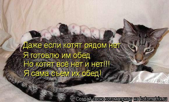 Котоматрица: Даже если котят рядом нет Я готовлю им обед Но котят всё нет и нет!!! Я сама съем их обед!