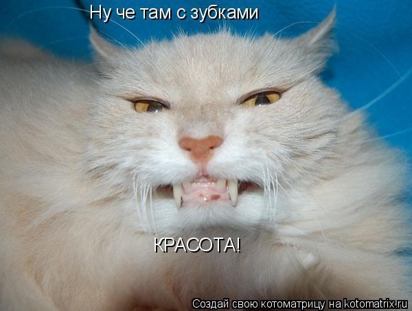 Котоматрица: Ну че там с зубками КРАСОТА!