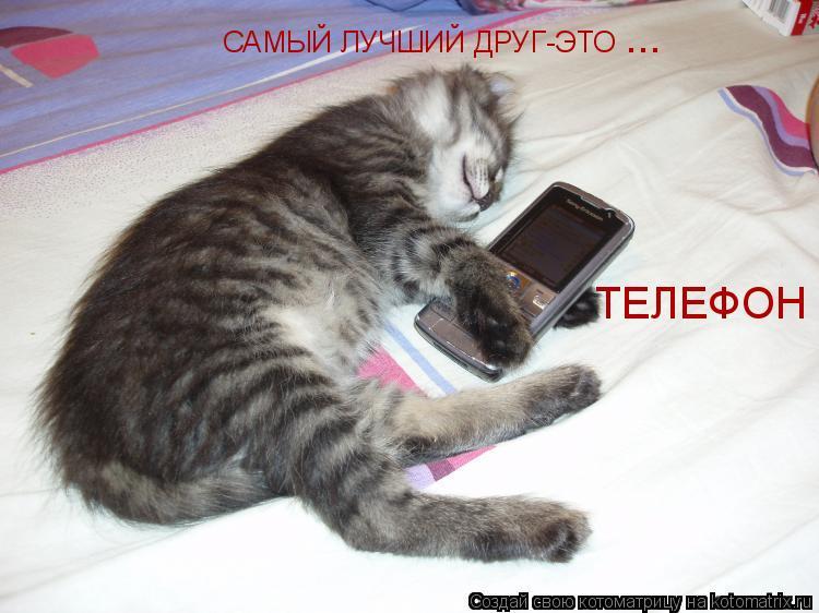 Котоматрица: САМЫЙ ЛУЧШИЙ ДРУГ-ЭТО ТЕЛЕФОН ...